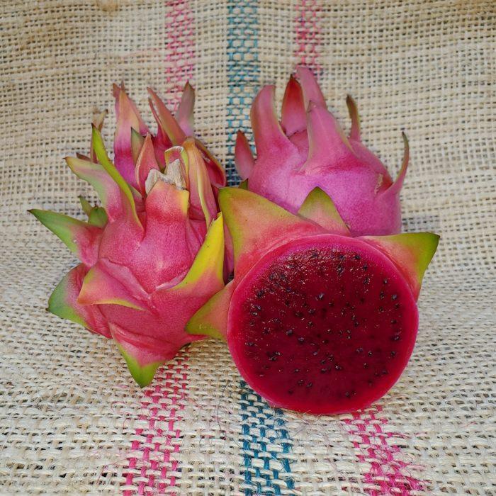 Sin Espinas Dragon Fruit Spicy Exotics