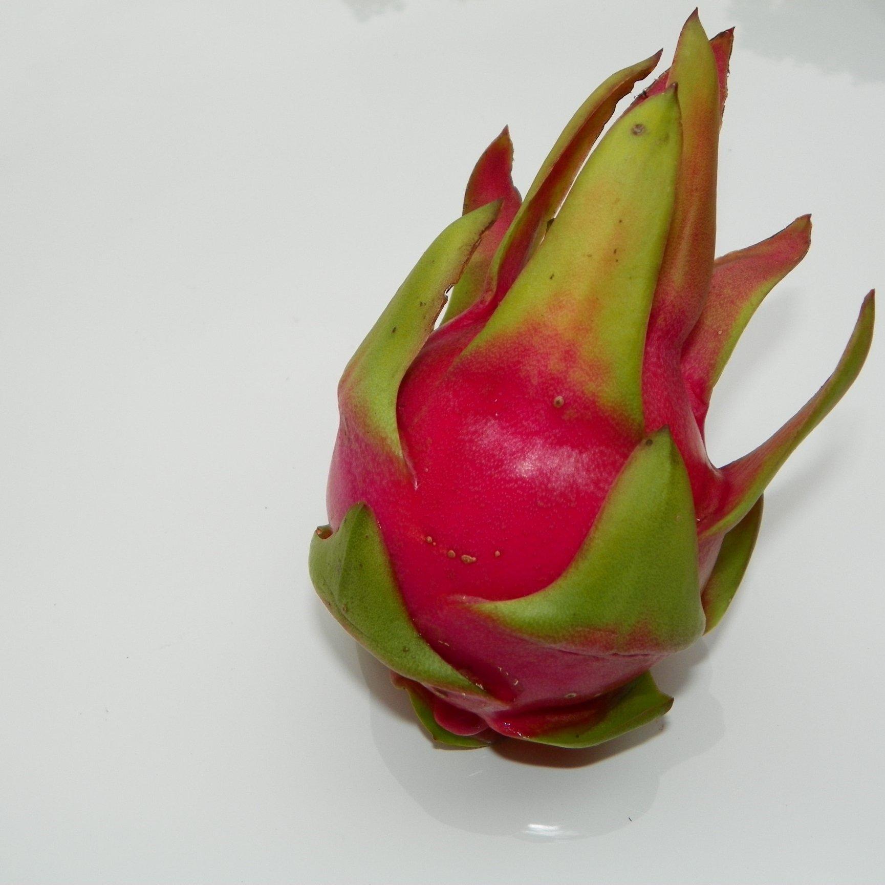 Sin Espinas Dragon Fruit