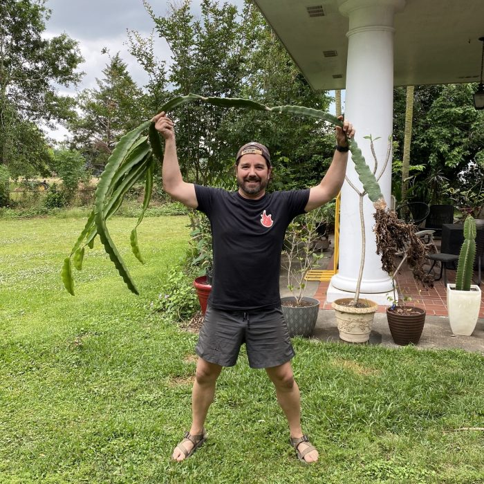 Jamaican Dragon Fruit plant from Spicy Exotics