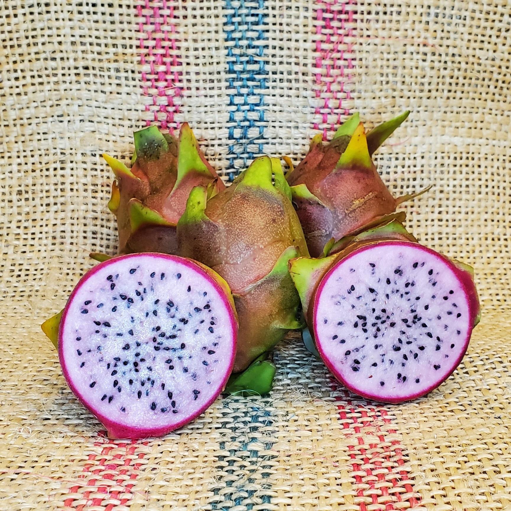 Asunta 2 Dragon Fruit by Spicy Exotics