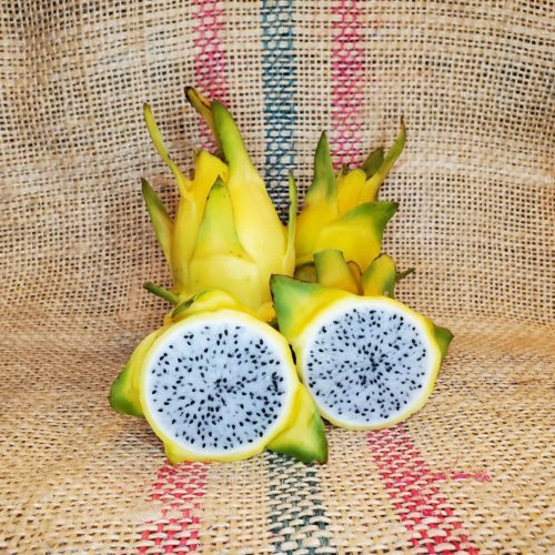 Israel Yellow Dragon Fruit by Spicy Exotics