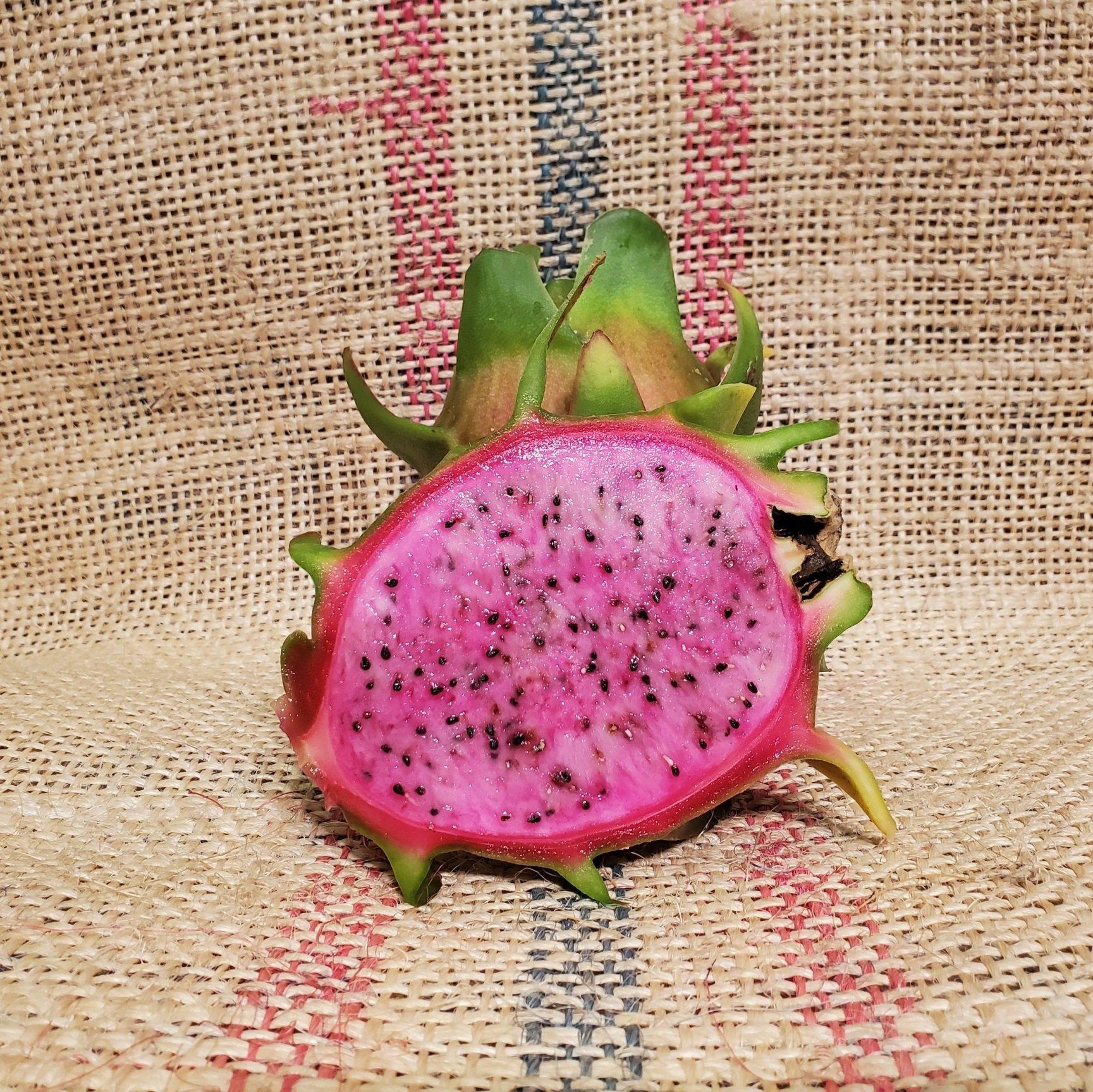 Asunta 4 Dragon Fruit Spicy Exotics