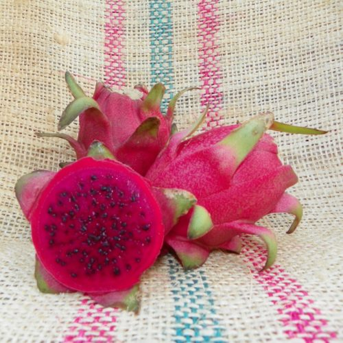 Dragon Fruit variety Cebra fruit Spicy Exotics