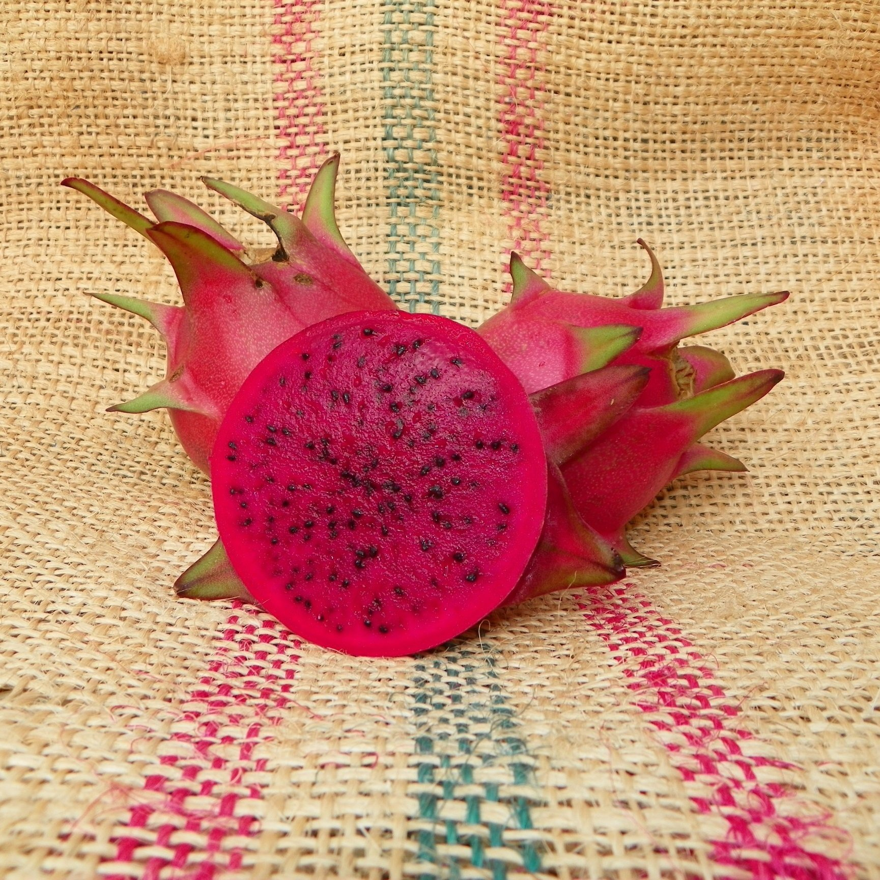 Country Roads Dragon Fruit Spicy Exotics