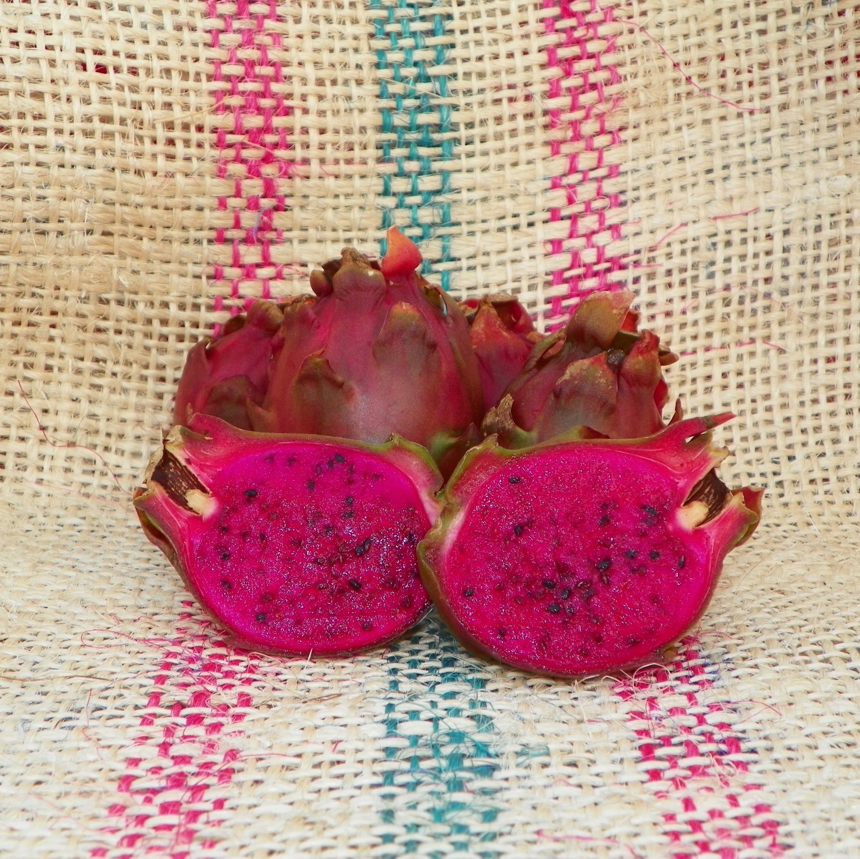 Dragon Fruit variety Neon fruit Spicy Exotics