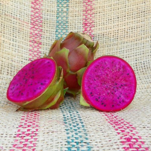 Dragon Fruit variety Nicaraguan Red fruit Spicy Exotics