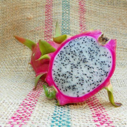 Hylocereus peruviaus Dragon Fruit Spicy Exotics