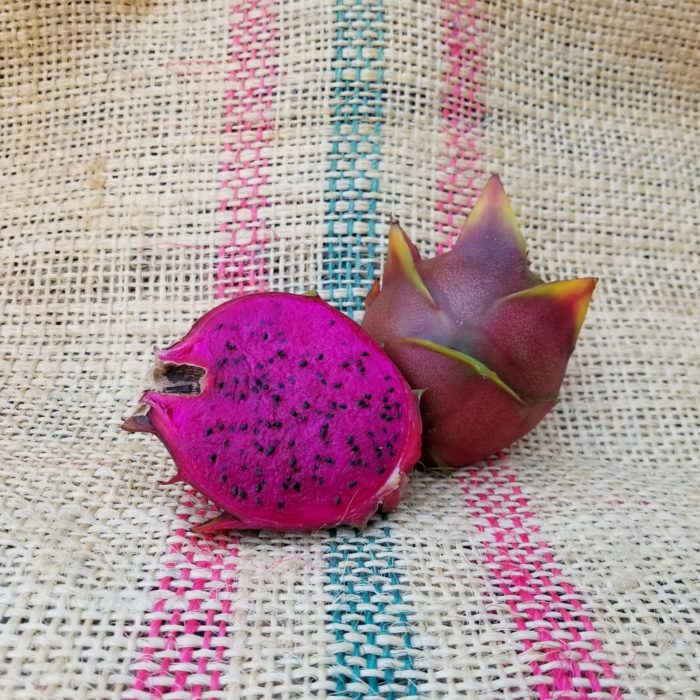 Paisley Dragon Fruit Spicy Exotics