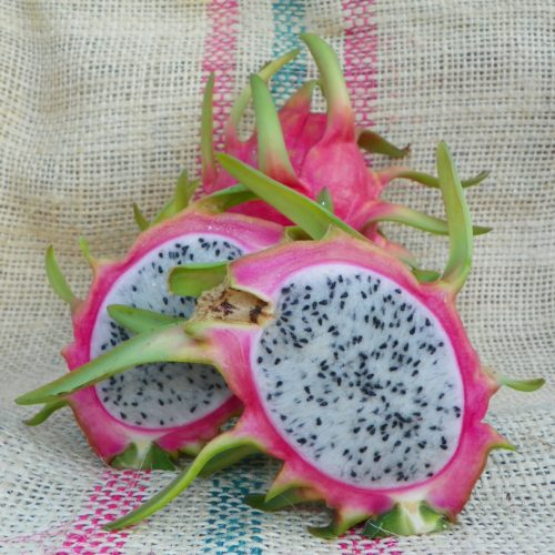 Dragon Fruit variety Thomson fruit Spicy Exotics