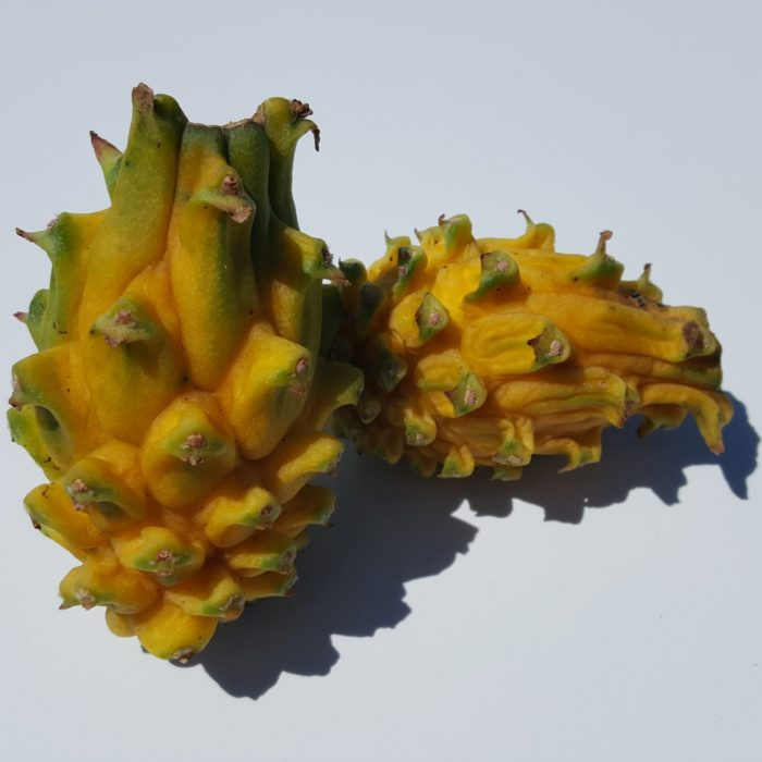 Yellow Dragon Dragon Fruit